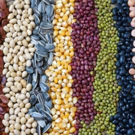 WGP 035: The Dark Side to Plant Nutrition – Anti-nutrients